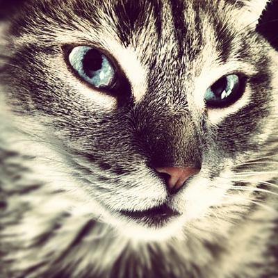 pet-kitten-cat-large