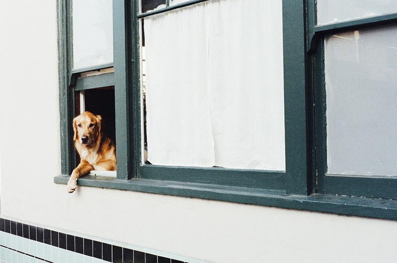 animal-dog-pet-window-large
