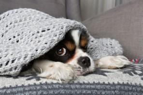 5 kroków by zabezpieczyć mieszkanie przed zimnem