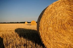 Zakup i sprzedaż ziemi rolnej – nie taki diabeł straszny