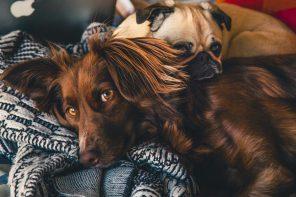 Mieszkanie przyjazne dla zwierząt